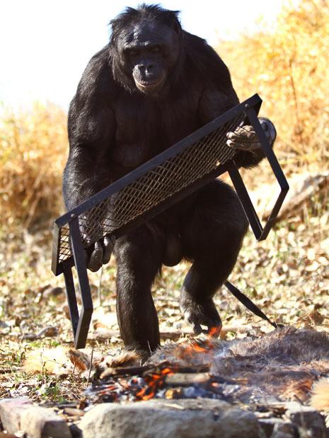 bonoboo5