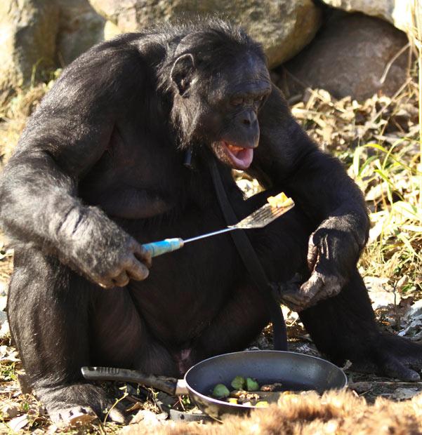bonoboo6