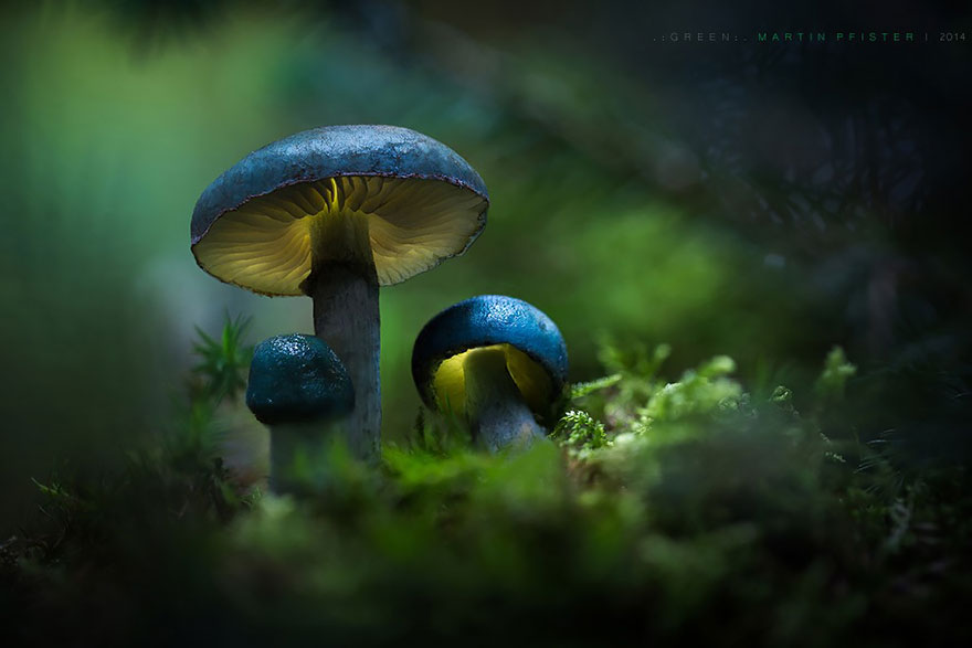 mushrooms-martin-pfister-11