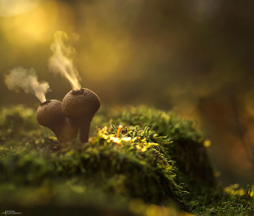 mushrooms-martin-pfister-3